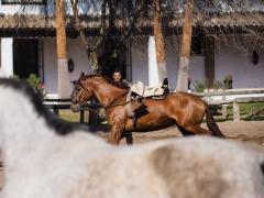Horse Training, El Rocío